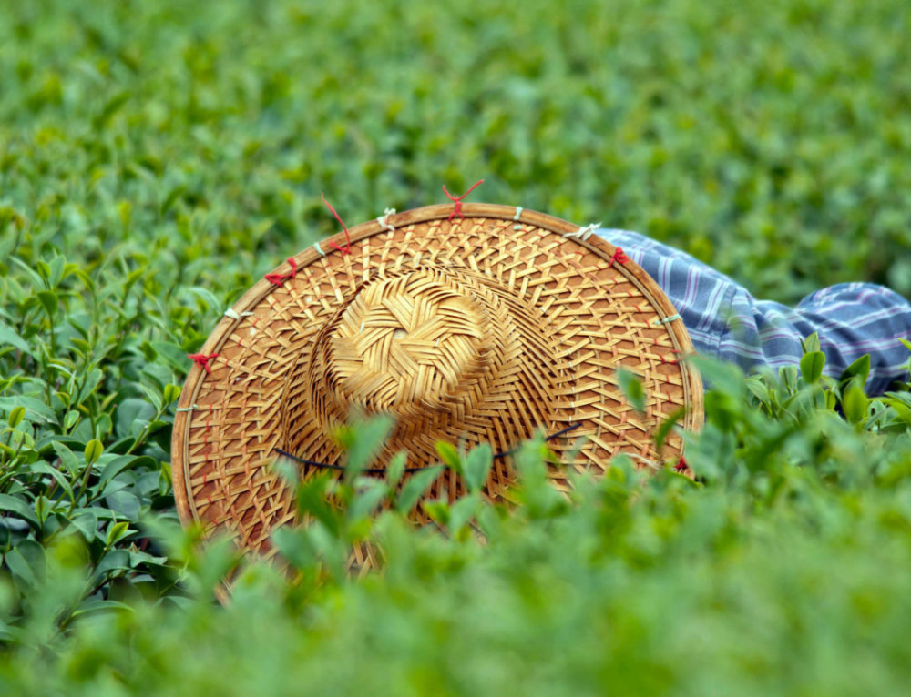 Το πράσινο τσάι